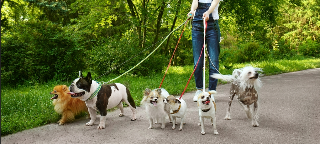 Dog and Pet Walking